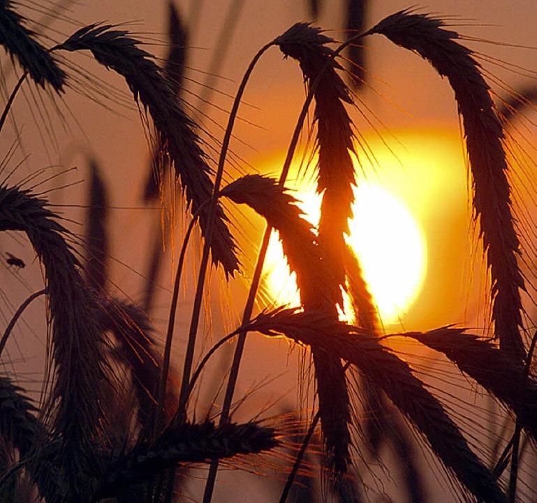 Der Getreidepreis steigt   | Foto: dpa