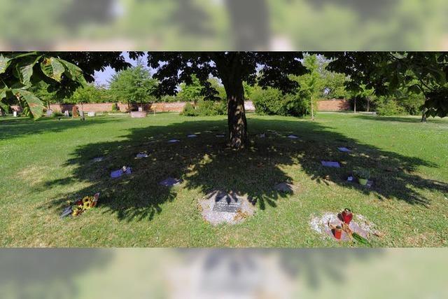 Auf dem Hauptfriedhof wird neues Baumfeld für Urnen geschaffen