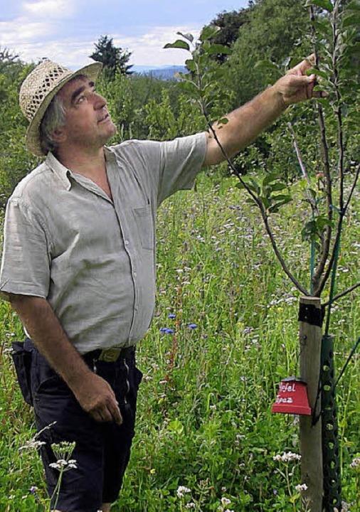 Martin Geng zeigt einen der neu angepflanzten Apfelbäume  in seiner Obstwiese.    Foto: Gabriele Hennicke