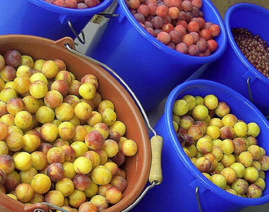 Ob frisch geerntet oder veredelt und h...Staufen gibt's jede Menge Obst.     Foto: Gabriele Hennicke