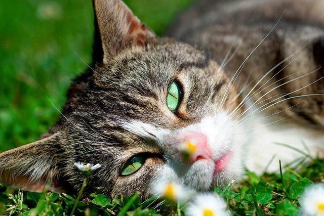 Katze 77 Tage nach Verschwinden tot im Plastiksack gefunden
