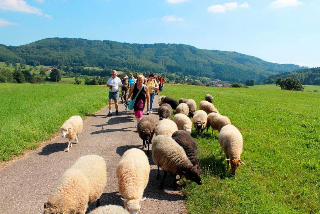 Die Schafe lassen sich Zeit  | Foto: Anja Bertsch