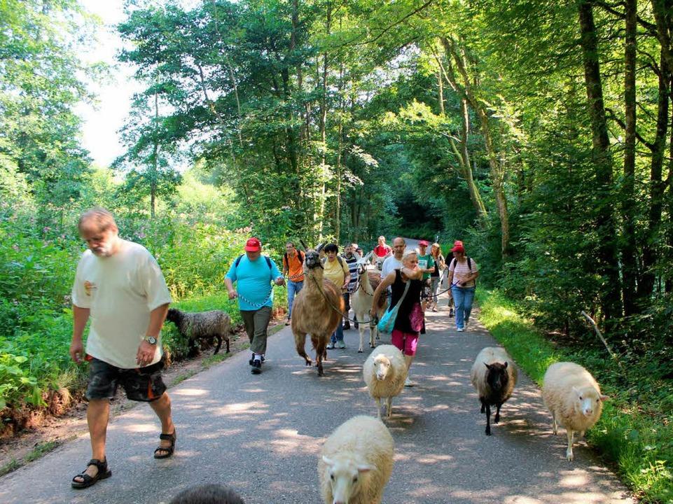 Menschen, Schafe und Lamas on tour  | Foto: Anja Bertsch