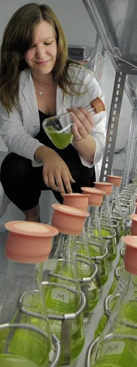 Greenovation-Mitarbeiterin Marina Sart...der Arbeit mit dem  Blasenmützenmoos.   | Foto: Bamberger