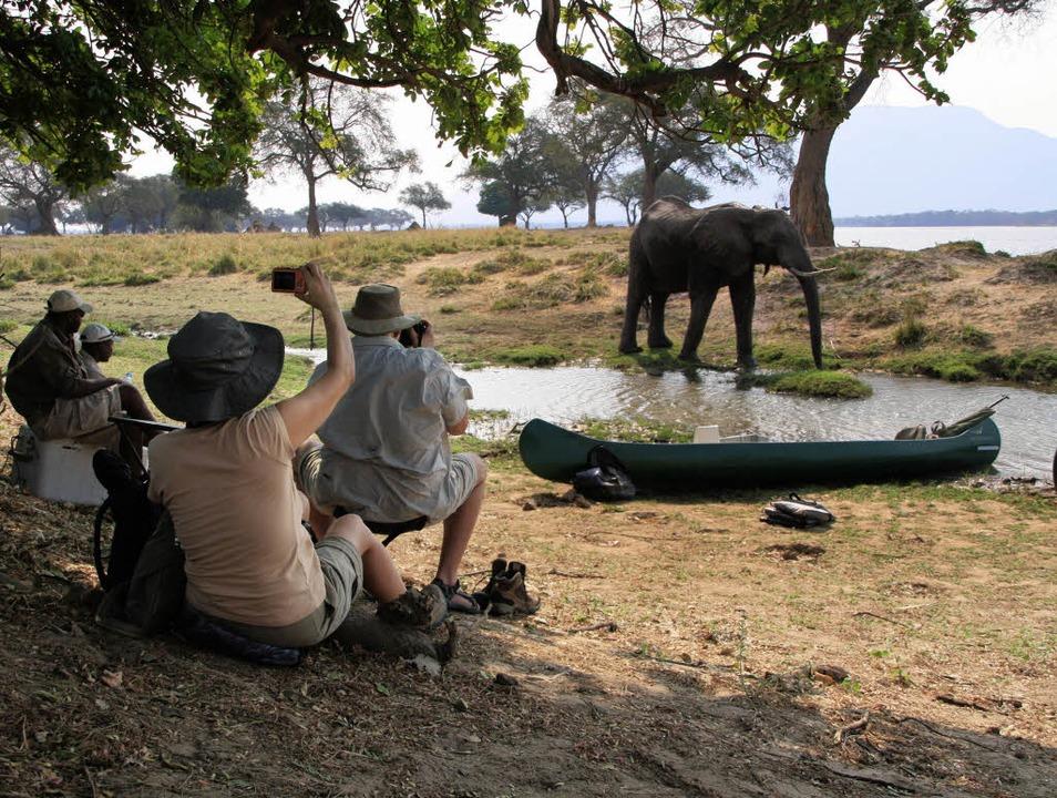 Klick, der Elefant ist im Kasten: Aber... an  das schmackhafte Grün zu kommen?   | Foto: Winfried Schumacher