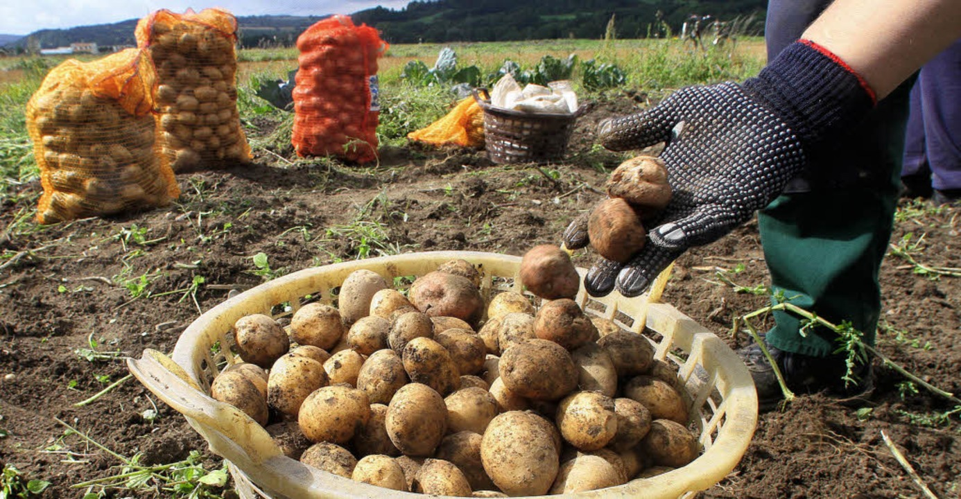 Was sich alles Leckeres aus Kartoffeln...ie Gäste beim Hördöpfelfäscht testen.   | Foto: DADP
