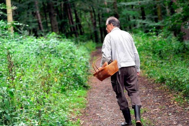 Hochschwarzwald: Wetter verleidet Sammlern die Pilzsaison