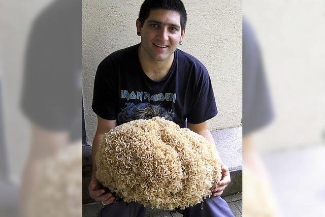 Noch ein Riesenpilz: Krause Glucke wiegt 6 Kilo