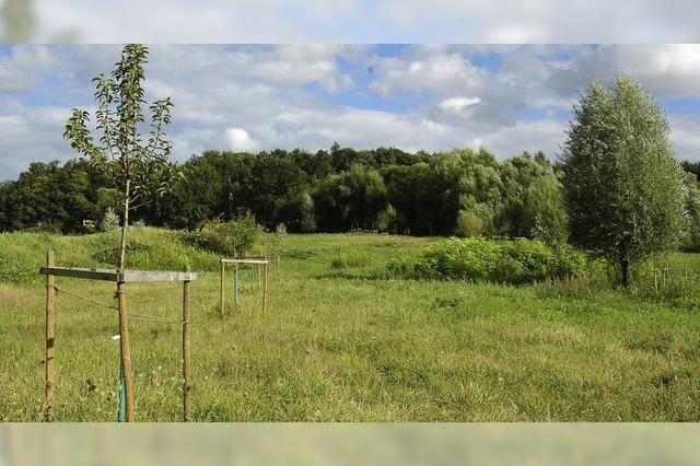 Ein Obstgarten als Biotop