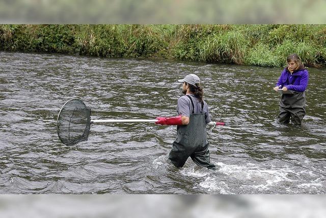 Fischen für die Datenbank