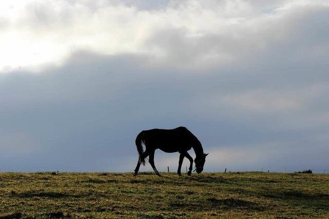 Pferdeschänder schlägt erneut in Freiburg zu – Zwei Stuten gequält