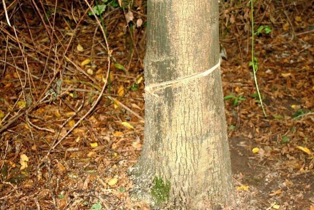 Unbekannte sägen immer wieder Bäume an – schon mehrere Fälle