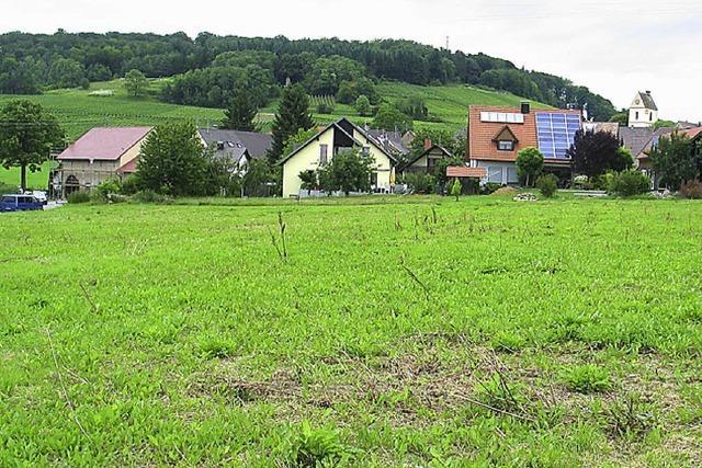 Tannenkircher Bauland begehrt