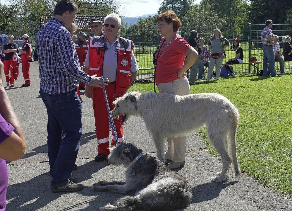 Auch DRK-Rettungshunde kamen ins Tierheim.   | Foto: Luisa Koch