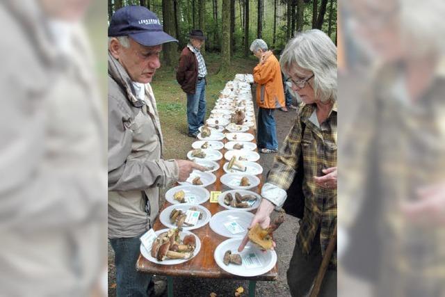 Reiche Beute für Pilzsammler