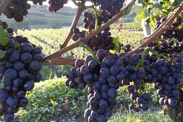 Zweimal Gold für Endinger Weinbaubetriebe