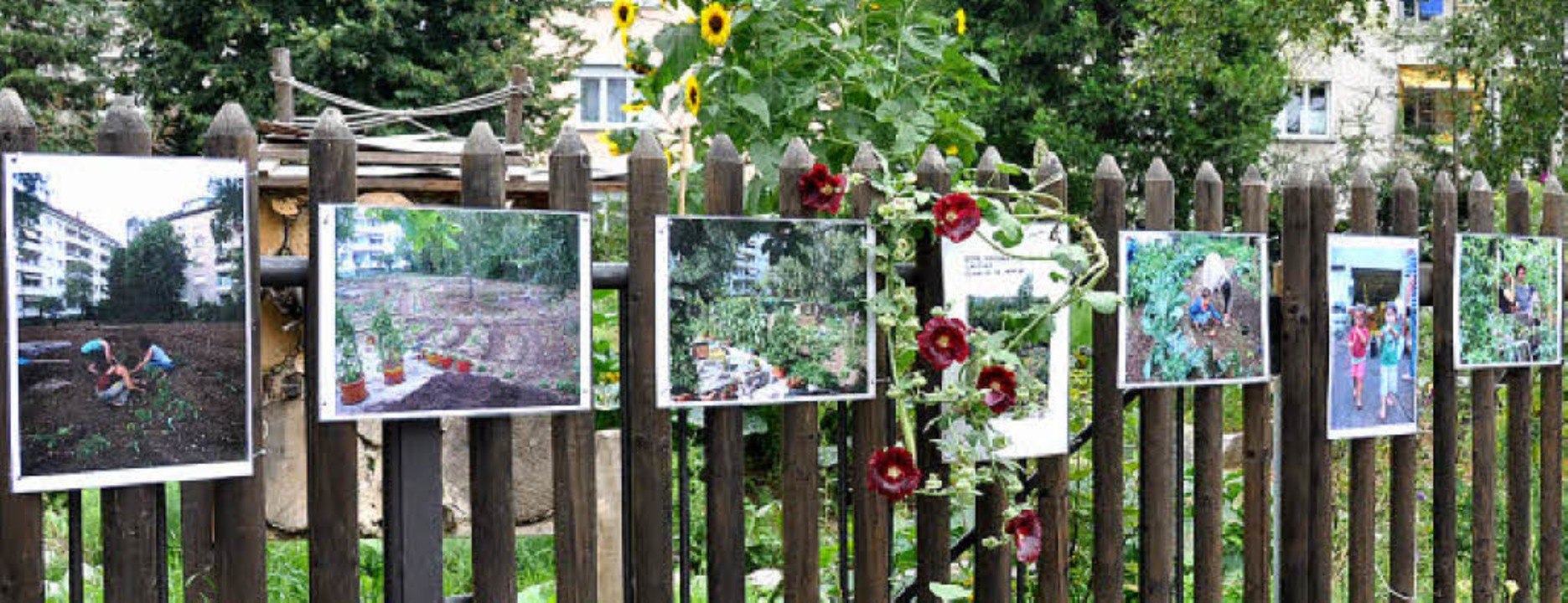 Am Zaun dokumentieren Fotos die Entwicklung.   | Foto: Annette Mahro