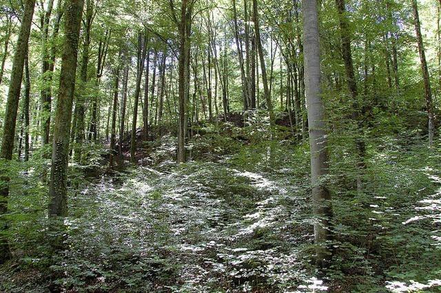 Der Stadtwald als Einnahmequelle