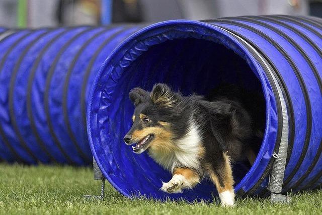 Premiere in der rasanten Hundesportart