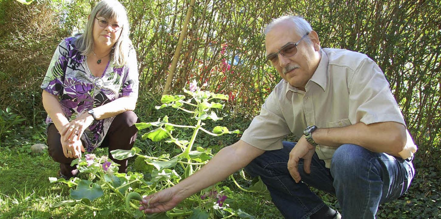 Irmgard und Siegfried Hartmeyer haben ...e genannt) in ihren Garten gepflanzt.   | Foto: Frey