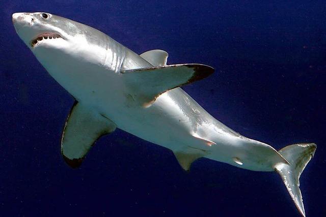 UN-Organisation will Haie besser schützen