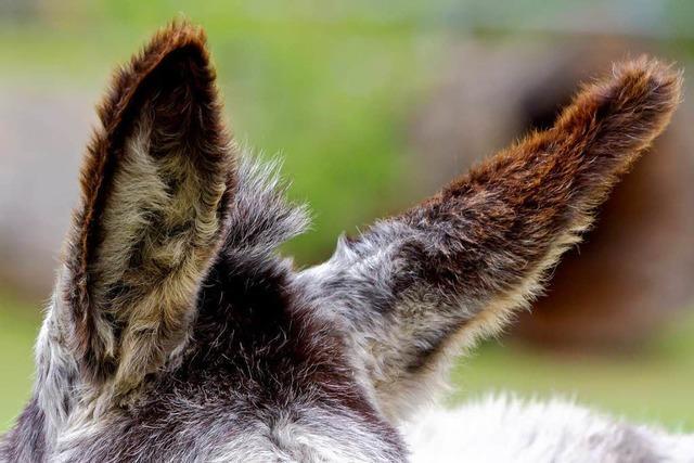 Gibt es Tierbordelle in Deutschland?