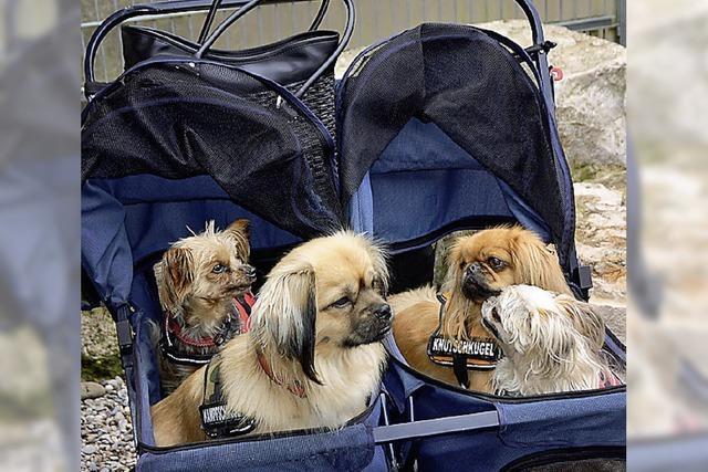 Hundeolympiade informiert spielerisch