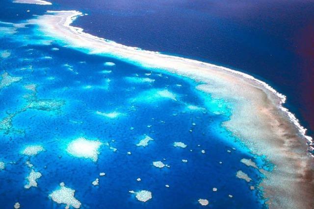 Dramatisches Korallensterben: Great Barrier Reef schwindet