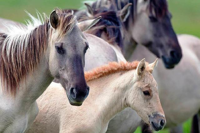 Pferdeschänder: Polizei bildet Ermittlungsgruppe