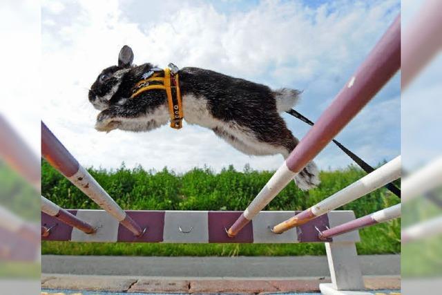 Kaninchensport zum Züchterjubiläum