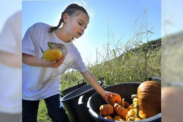 Herbst- und Kürbisfest auf dem Mundenhof