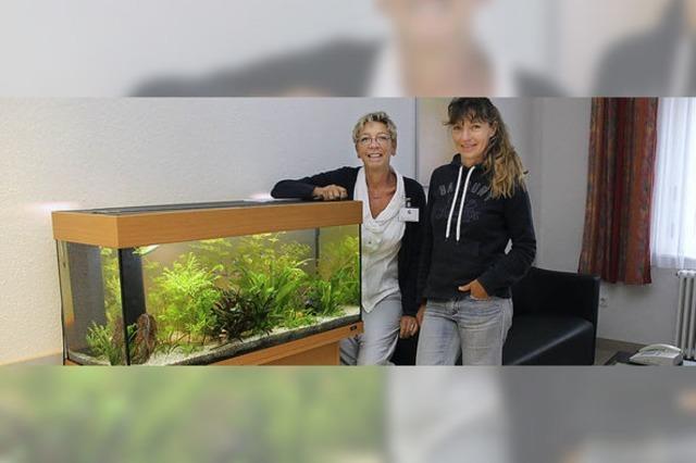 Aquarium beruhigt