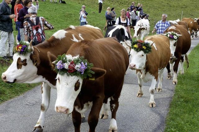 Blümchen für das liebe Vieh
