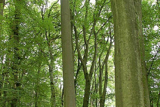 Baumgröße je nach Standort