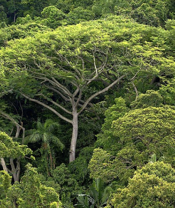 Wälder erhalten oder wieder aufpäppeln – das ist eines der UN-Ziele.   | Foto: dpa