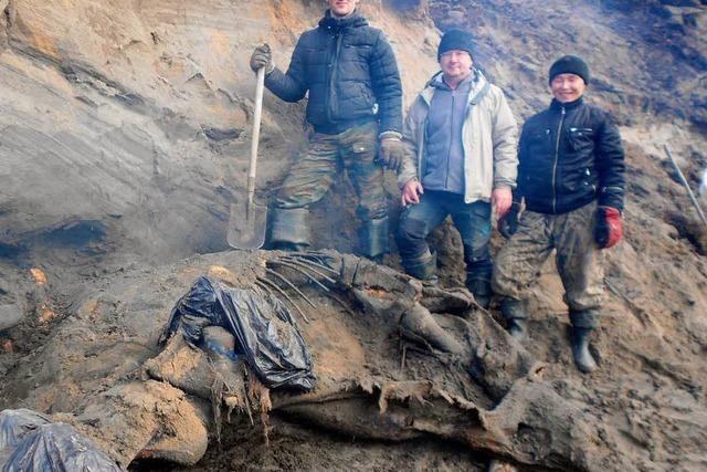 Elfjähriger Junge entdeckt Mammut
