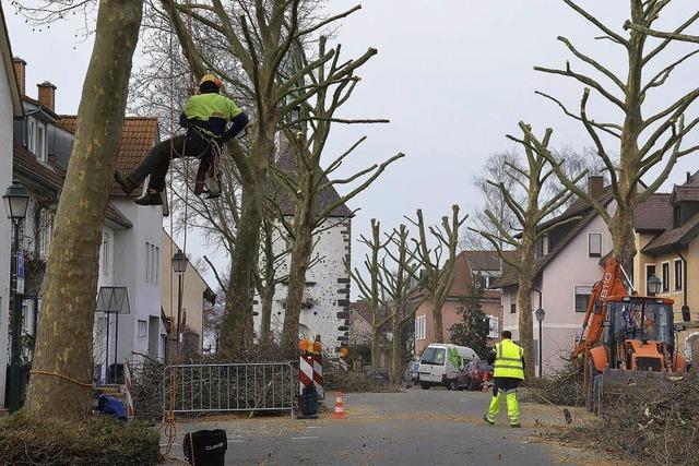 4200 Bäume im Stadtgebiet