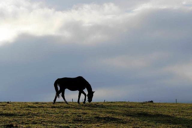 Tierschänder: Pferdebesitzer engagieren Sicherheitsdienst