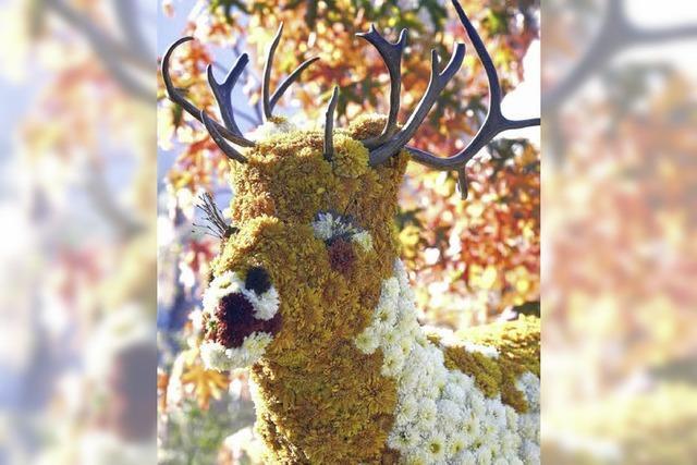 Als VIP zur Chrysanthema in Lahr