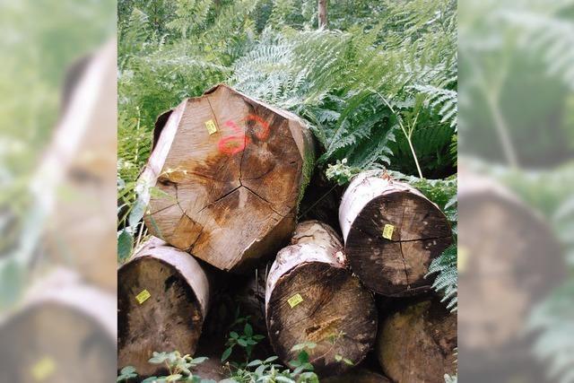 Wald wirft weiter Gewinn ab