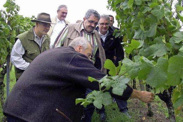 Klares Bekenntnis zum Anbaustopp im Weinbau