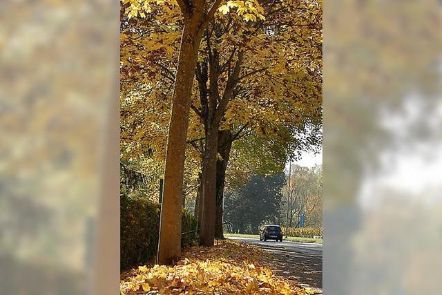 IG Zollfreie will beim Lärmschutz die Bäume erhalten