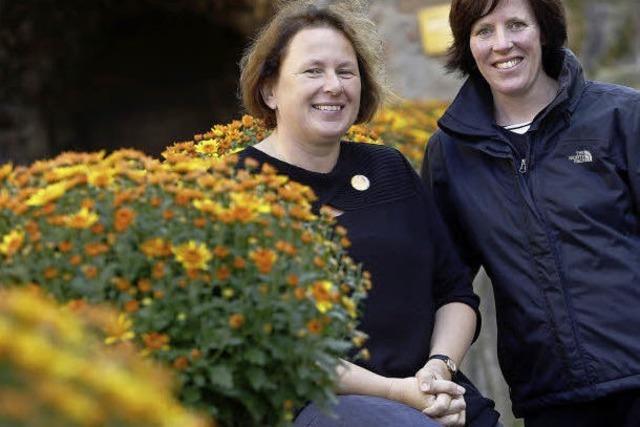 Die Chrysanthema soll jünger werden