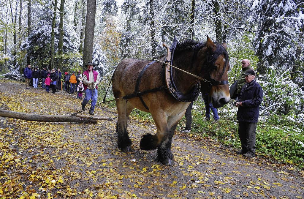 Holzrücken per Pferd war für viele das Spannendste ...