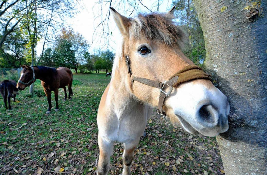 Pferde auf einer Wiese in Weingarten: ... die Einsatzgruppe Koppel der Polizei.  | Foto: Michael Bamberger