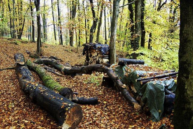 Stadtwald wirft keinen Gewinn ab