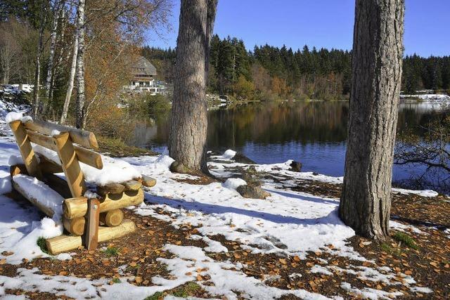 Am Windgfällweiher soll eine Waldliegewiese angelegt werden