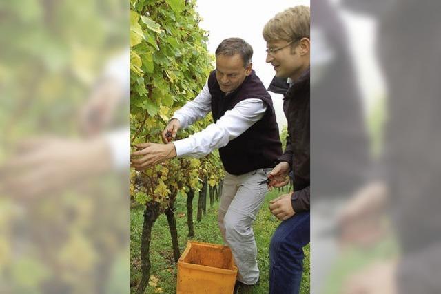 Neuer Schwung für den Weintourismus