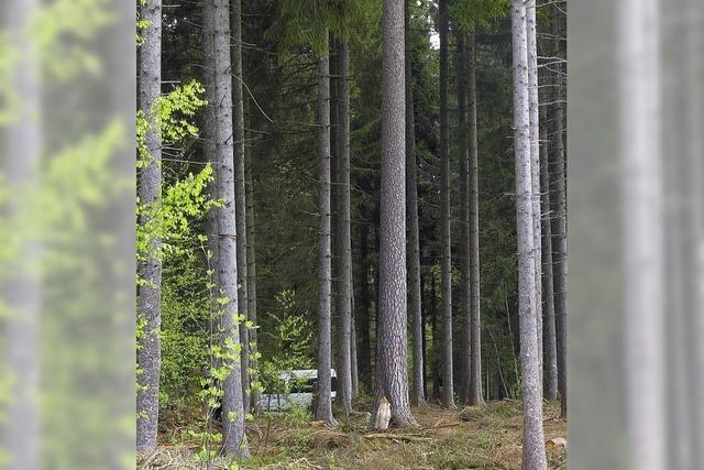 Wer schützt die Natur im Wald?