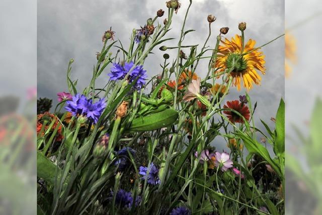 Land braucht mehr bunte Blumenwiesen